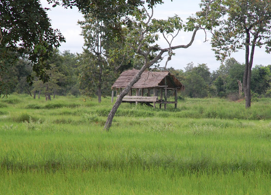 attraction-Rice Field On Road To Banteay Torp.jpg