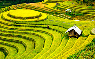 Vietnam Private Tours | 6-Days Southern Sapa and Halong Bay Cruise